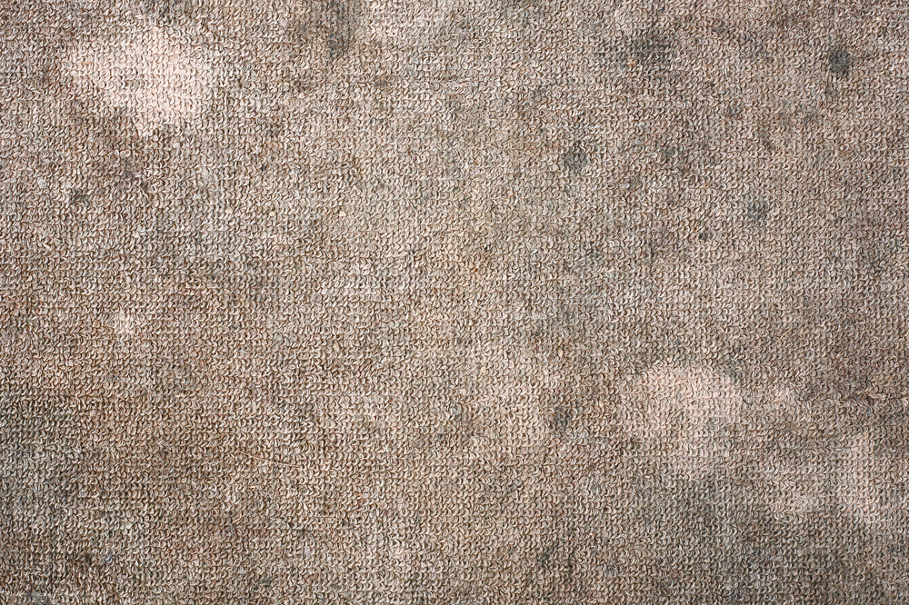 how to spot the signs of carpet rot