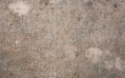 Signs You Need to Replace Your Carpeting